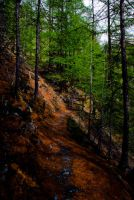 way in the wood by YvesDesign