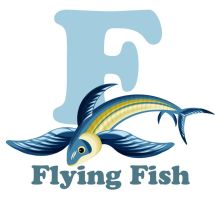F is for Flying fish by RSImpey