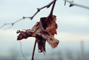 Morte autunnale by MetallerLucy
