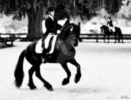 Dressage Show - Friesian by Deirdre-T