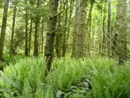 Fern Forest by Track-Maidens