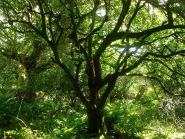 The Tree Of Green by Estruda