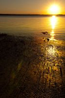 Mangrove roots at sunset by wildplaces