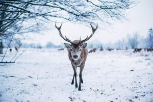 Deer friend. by kittysyellowjacket