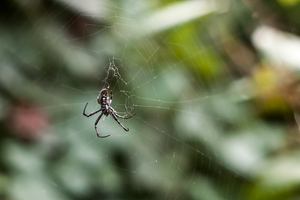Spider by KateIndeed