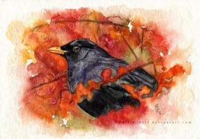Blackbird among berberis leaves by wolf-minori