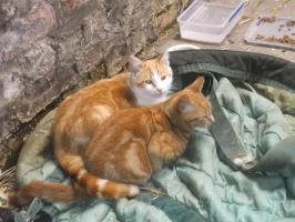two new cats by kk20152d