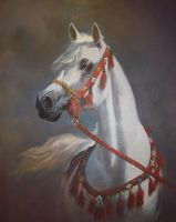 White Arab horse by sami5