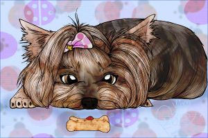 Yorki And The Lady Bug by Foux