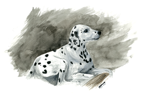 Dalmatian by NakedKittyCreations