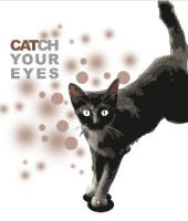 CATch your eyes by ayom52