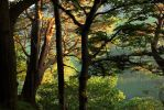 Buttermere Trees by scotto