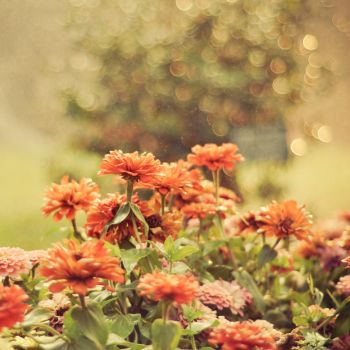 Flowers with Sprinkler Bokeh by anshu18