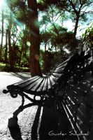 The Bench by GunterSchobel
