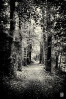In the woods by sylvaincollet