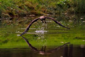 Skimming the Surface.. by quaddie