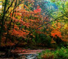 Autumn Glory by InLightImagery