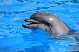 Happy dolphin :) by BubbleCloud