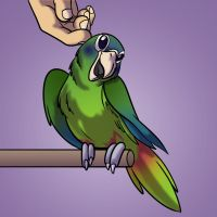 Commission- Hispaniolan Parrot by Fyuvix