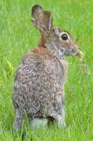 Peter Cottontail by wreckingball34