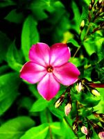 Pink Vine Flower by LC2219