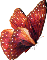 Butterfly Stock 59 by CandyFlossSTOCK