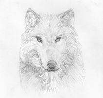 Wolf by Tombstonedust