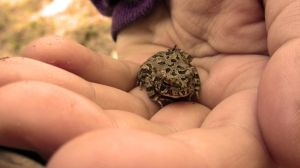 Frog by KLN-loves-fish