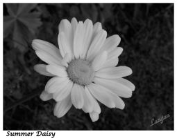 Daisy in blacknwhite by Lazytea