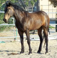 Horse 02 by Kabu-Stock