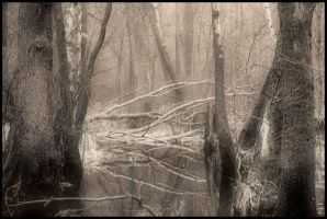 The Swamp by orientespl