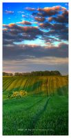 Fields of Joy by werol
