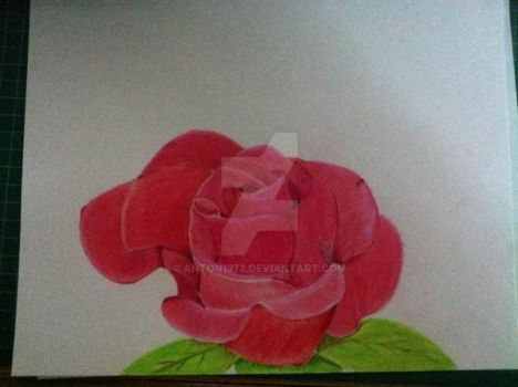 Rose by Anton1973