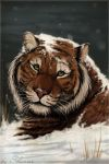 tiger in snow by madShanni
