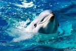 Curious Dolphin by JKase911