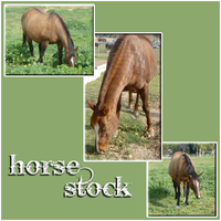 Horse Stock Images by aymo87