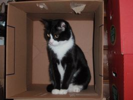 Felix - The Cat In The Box by Scoiattolina