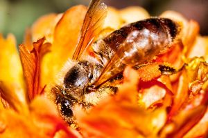 Busy Bee by TPextonPhotography