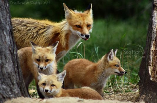 Little Family by Sagittor