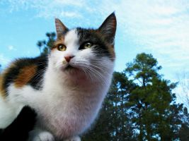 Calico by Snorlaxin