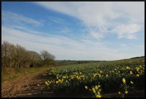 Late daffodils, late afternoon by PlasticusForkus