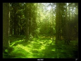 MAGIC FOREST by JTphoto