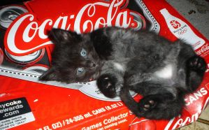 Cat on Coke by ice-queen-blue