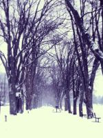 Winter 2013 by Jessica-Nahulan