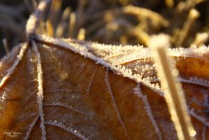 Lines of Frost by Kaeley