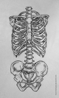 Ribcage and pelvis sketch by love-a-lad-insane
