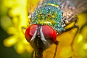 Fly Supermakro 2 by Misterooo