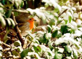 Spring Robin. by quaddie