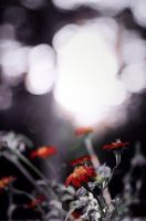 Flowers of Autumn Time by beyondimpression