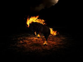 Last of the Flaming Stallions by fizzy-logic